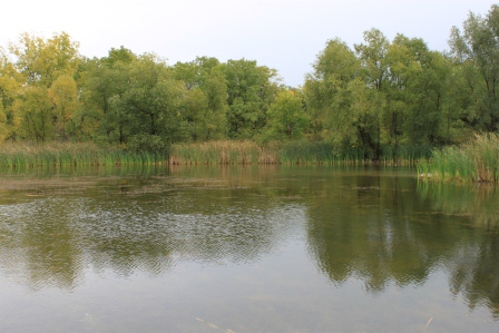 Manchester Hill Park Pond