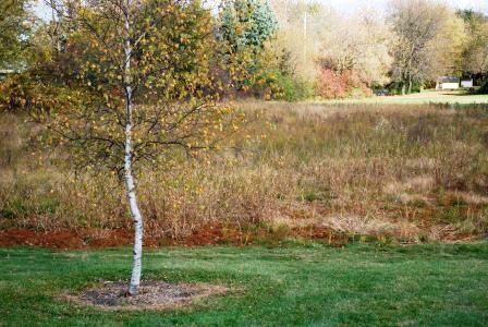 Schmidts Park Prairie Planting